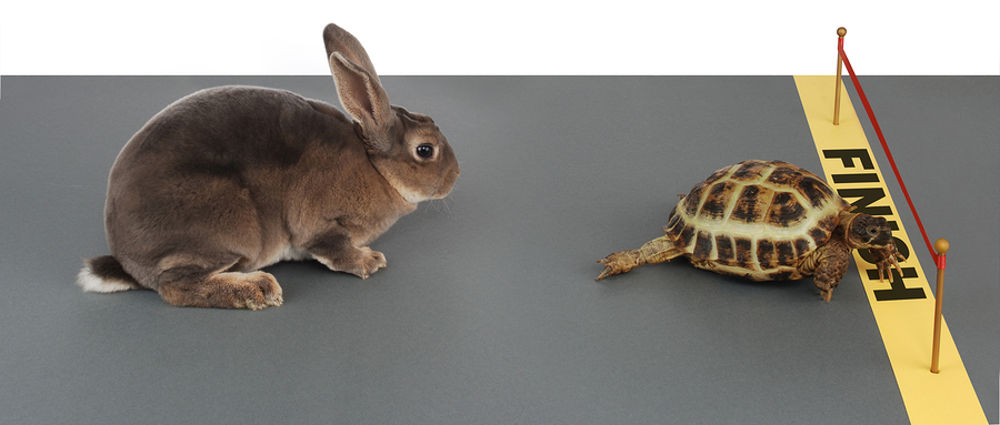fast_vs_careful_growth